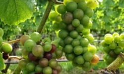 North_Fork_Wine_Tours_North_Noyack_LI_New_York